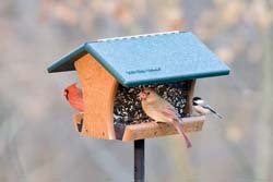 Wild Birds Unlimited Classic Feeder