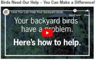 Birds Need Our Help